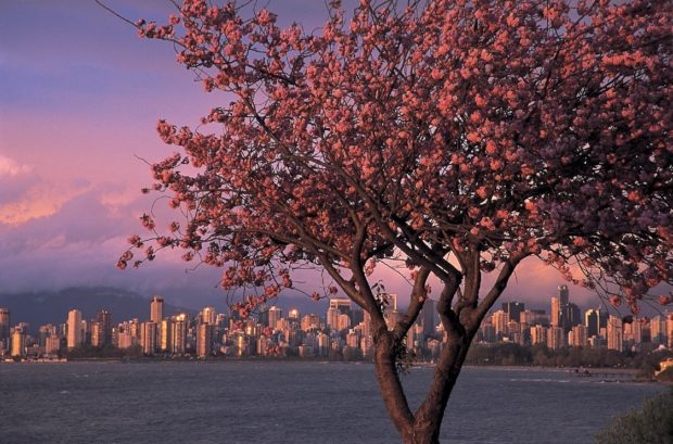 Cheer up, Vancouver, the winter of our discontent will give way to spring